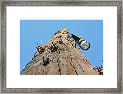 Invasion Of The Lubbers Framed Print by Lynda Dawson-Youngclaus
