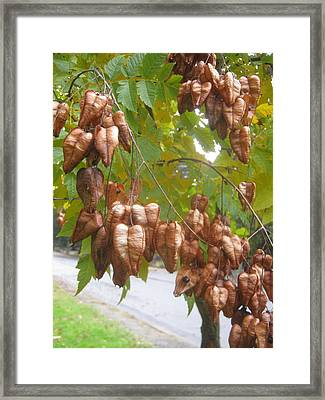 Invasion Of The You Know What   Snatchers Framed Print
