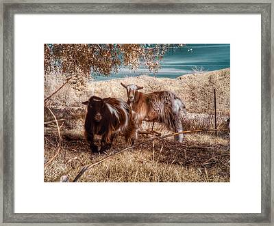 Framed Print featuring the photograph Invisible Lives by Chriss Pagani