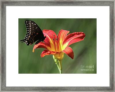 Inviting Framed Print by Sabrina L Ryan