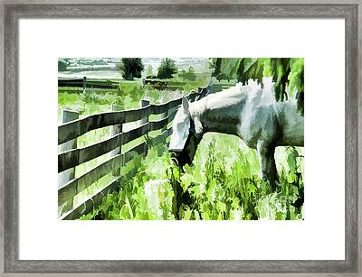 Iowa Farm Pasture And White Horse Framed Print by Wilma Birdwell