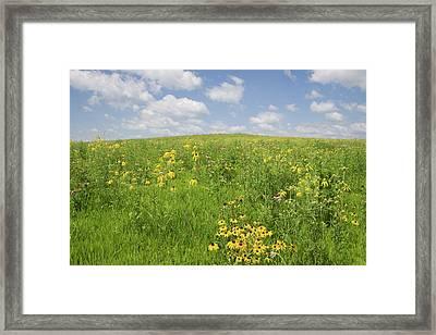 Iowa Summer Flowers I Framed Print