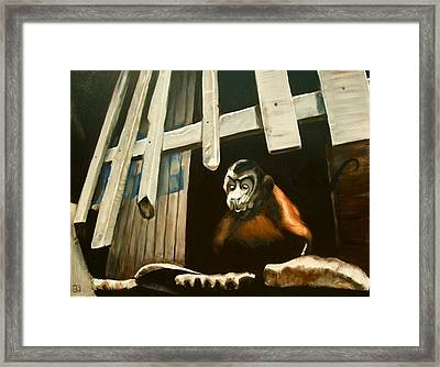Iquitos Monkey Framed Print by Chris  Slaymaker