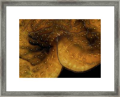Iridescent Coral Framed Print by Jean Noren