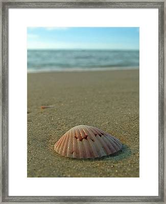 Iridescent Seashell Framed Print by Juergen Roth