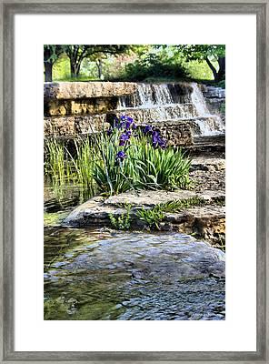 Iris 1315hdr Framed Print