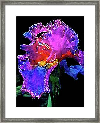 Framed Print featuring the photograph Iris 3 by Pamela Cooper