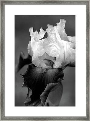 Iris 6621 H_5 Framed Print
