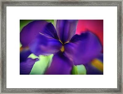 Iris Abstract Framed Print by Michael Putnam