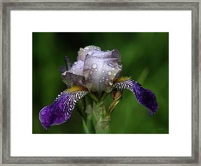 Iris After The Rain 1409 H_2 Framed Print