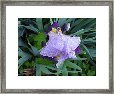 Iris After The Rain IIi Framed Print