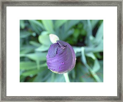 Iris After The Rain V Framed Print