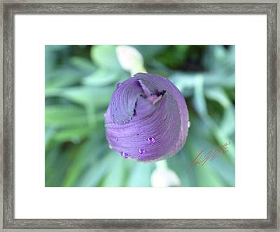 Iris After The Rain Vi Framed Print