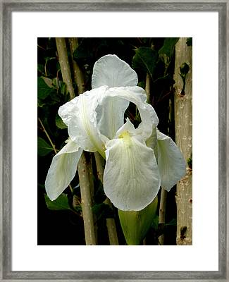 Iris After The Storm Framed Print