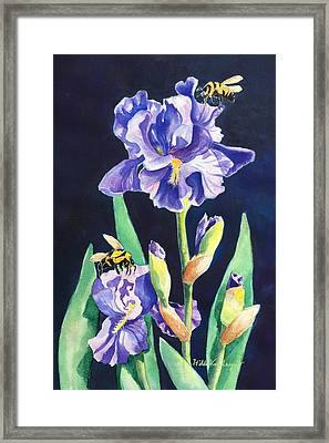 Iris And Bees Framed Print
