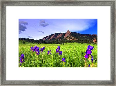 Iris And Flatirons Framed Print by Scott Mahon