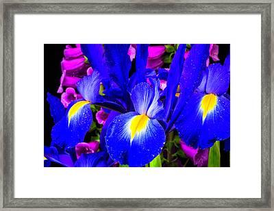 Iris And Foxglove Framed Print