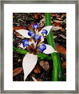 Iris Framed Print by Angela Murray