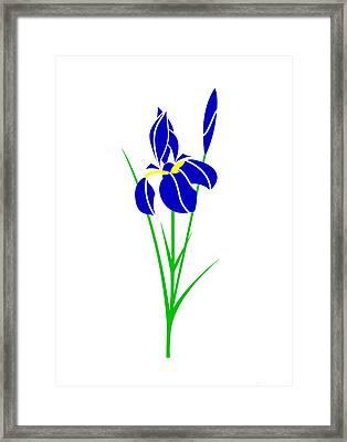 Iris Framed Print by Asbjorn Lonvig