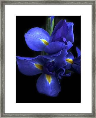 Iris At Dusk Framed Print by Jessica Jenney
