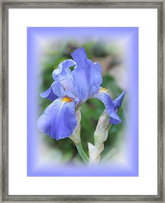 Iris Beauty Framed Print
