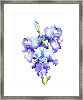 Iris Blooms Framed Print