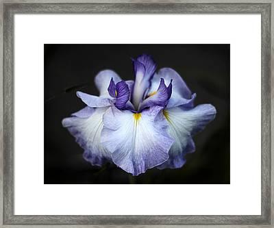 Iris Blossom Framed Print by Jessica Jenney