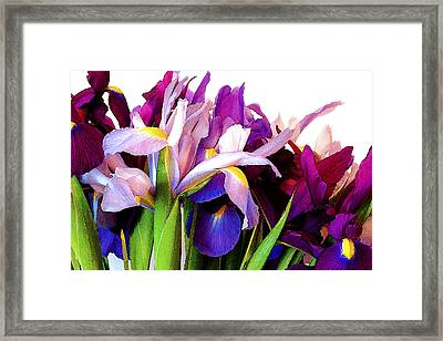 Iris Bouquet Framed Print