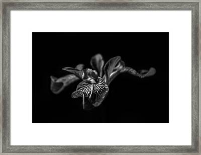 Iris Framed Print by Bulik Elena