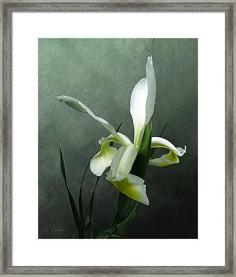 Iris Celebration Framed Print