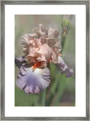 Iris Celebration Song 1. The Beauty Of Irises Framed Print by Jenny Rainbow