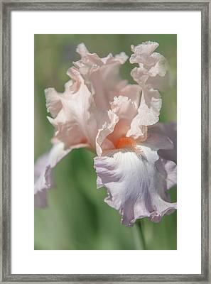 Iris Celebration Song. The Beauty Of Irises Framed Print by Jenny Rainbow