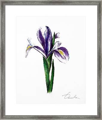 Iris Framed Print by Danuta Bennett