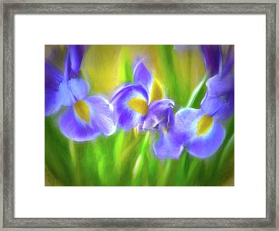 Iris Delight Framed Print by Sharon Lisa Clarke
