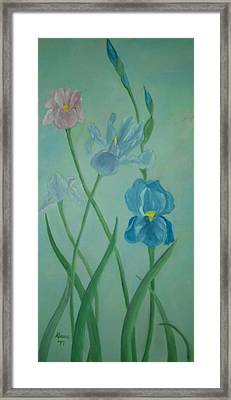 Iris Dreams Framed Print by Alanna Hug-McAnnally