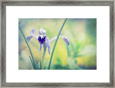 Iris Dreams - Iris Reticulata Framed Print