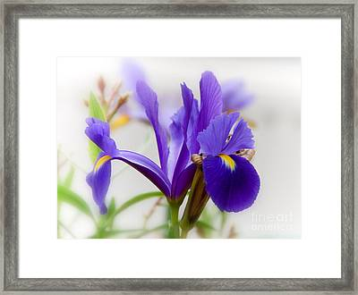 Framed Print featuring the photograph Spring Iris by Elaine Manley