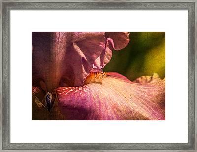 Iris Framed Print by Elena E Giorgi
