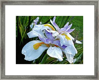 Iris Enjoying The Sunshine Framed Print by Kaye Menner
