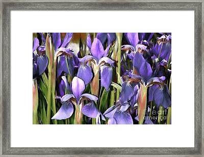 Framed Print featuring the photograph Iris Fantasy by Benanne Stiens