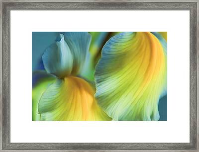 Iris Fantasy Framed Print