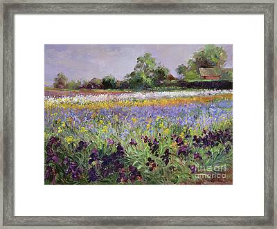 Iris Field And Two Cottages Framed Print by Timothy Easton