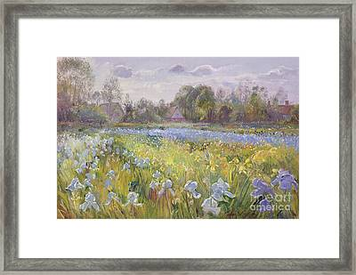 Iris Field In The Evening Light Framed Print by Timothy Easton