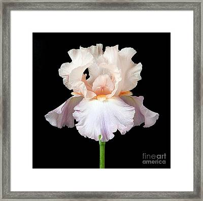 Iris Flower Framed Print