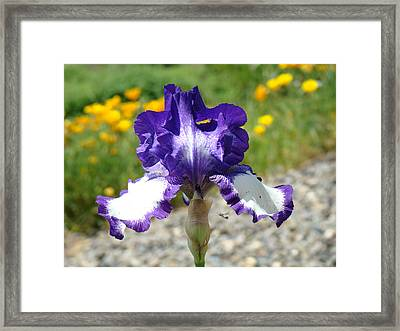 Iris Flower Purple White Irises Nature Landscape Giclee Art Prints Baslee Troutman Framed Print by Baslee Troutman