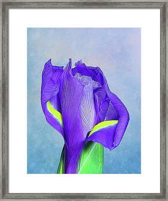 Iris Flower Framed Print