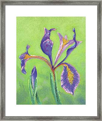 Iris For Iris Framed Print