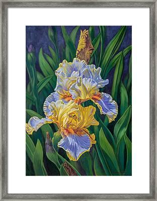 Iris Garden 3 Framed Print