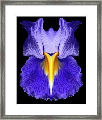 Iris Framed Print by Gary Zuercher
