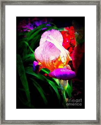 Iris Glow Framed Print by Janine Riley